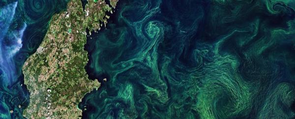 Mar_báltico_calidad_agua