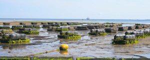 La Comisión Europea adopta las directrices estratégicas para una acuicultura sostenible y competitiva