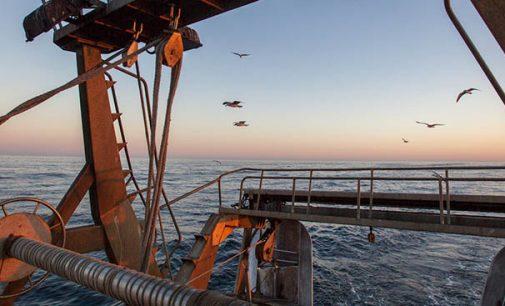 Crece la biomasa mundial de los peces demersales