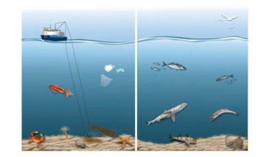 El ecosistema del golfo de Cádiz se recupera gracias a la regulación de la pesca