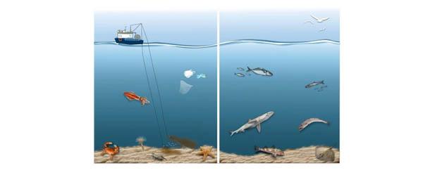 regulación_de_la_pesca