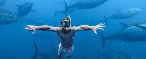 Balfegó prevé más de 20.000 turistas para bañarse entre atunes