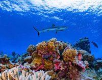 Completan el primer mapa mundial de arrecifes de coral