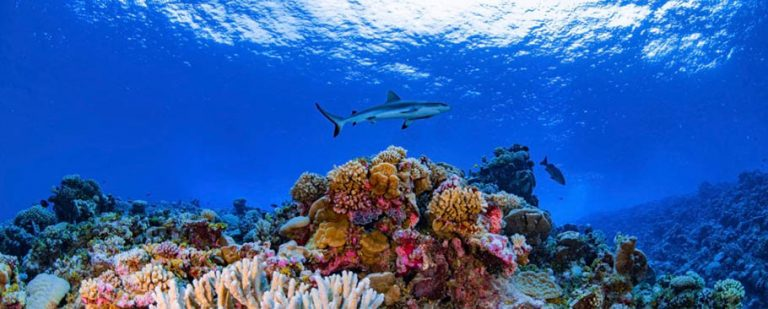 arrecife_de_coral